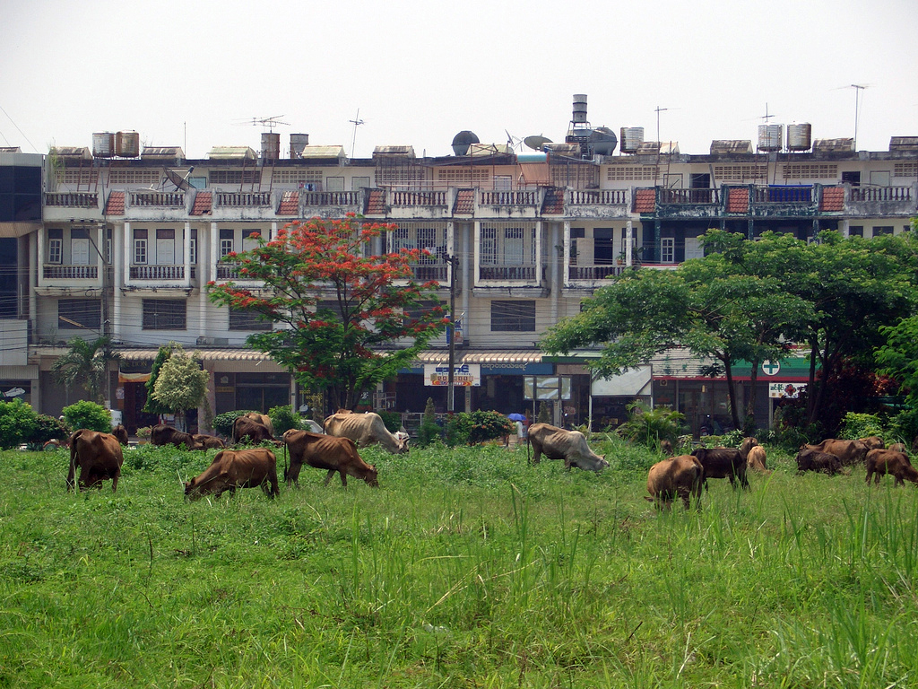 Tachileik Myanmar  City new picture : Flats, Tachileik, Myanmar Wikimedia Commons