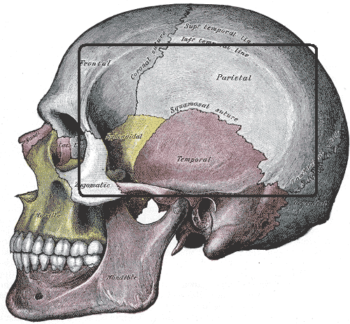 Temporal fossa - Wikipedia Infratemporal Fossa Boundaries