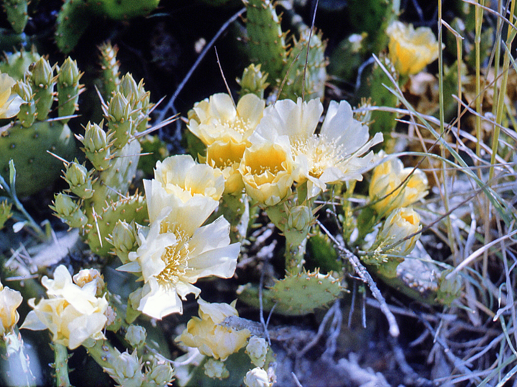 Image Result For Free Printable Cactus