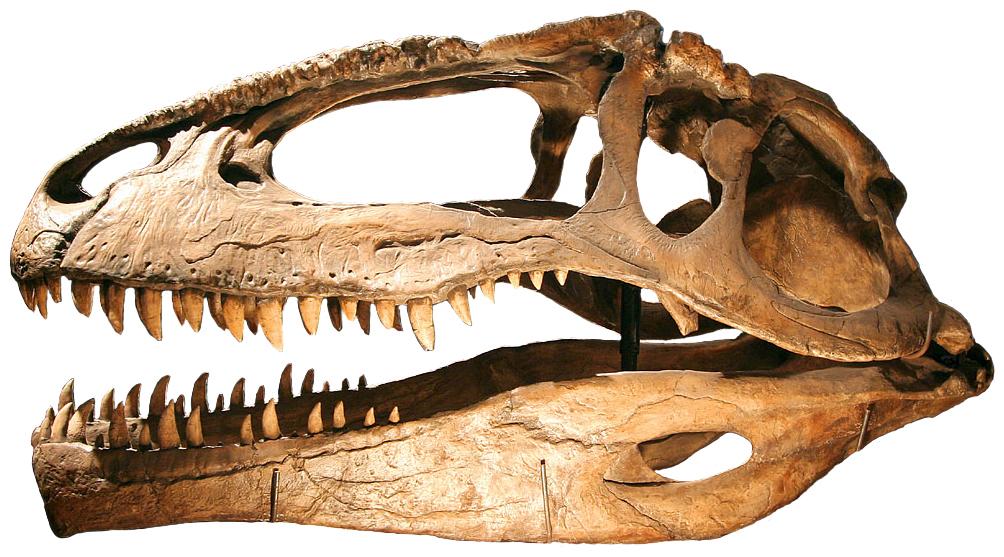 http://upload.wikimedia.org/wikipedia/commons/b/bd/Giganotosaurus.jpg