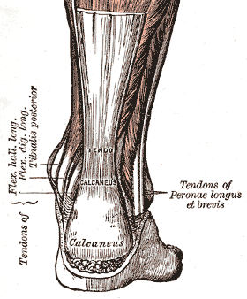 tendinitis tendon aquiles insercion calcaneo