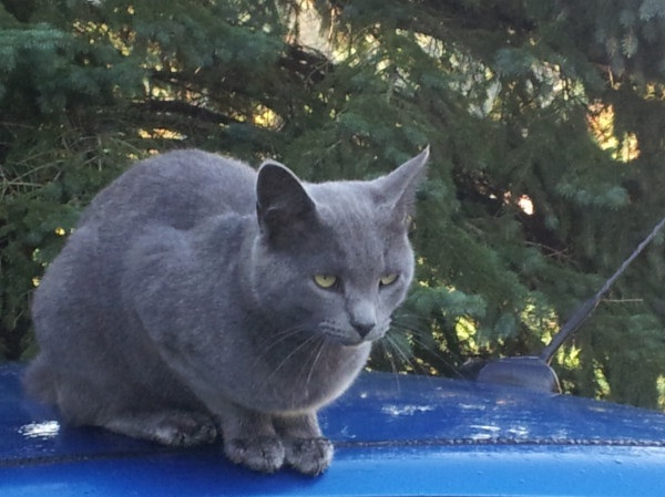 Grey Cat With Big Eyes