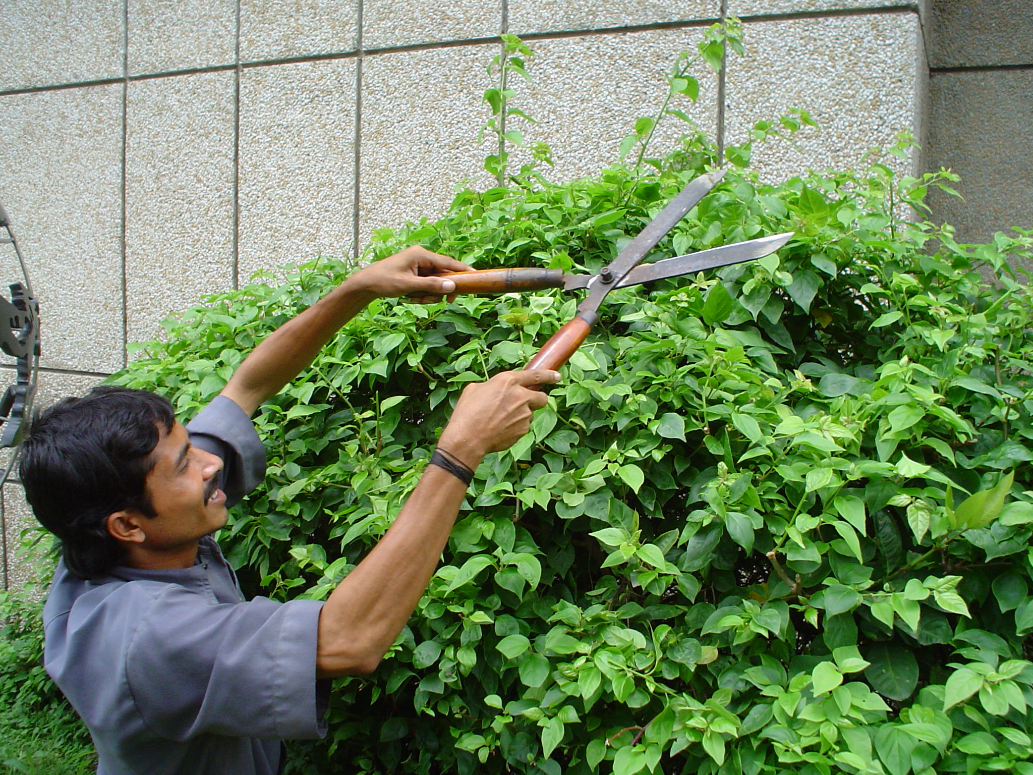Hedge trimmer wikiwand for Gardening tools wikipedia