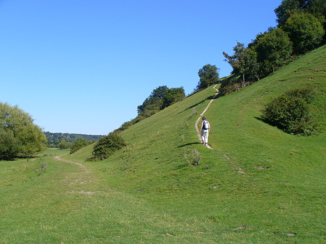 Hillside by Cock Marsh - geograph.org.uk - 516796