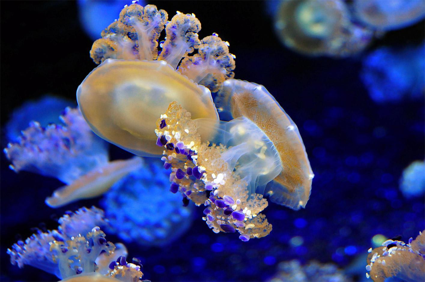 Image Result For Jellyfish Aquarium