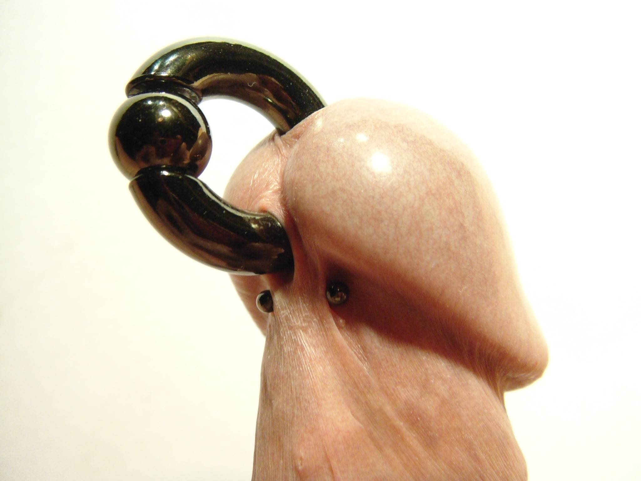 dolphin piercing bilder erotik kleve