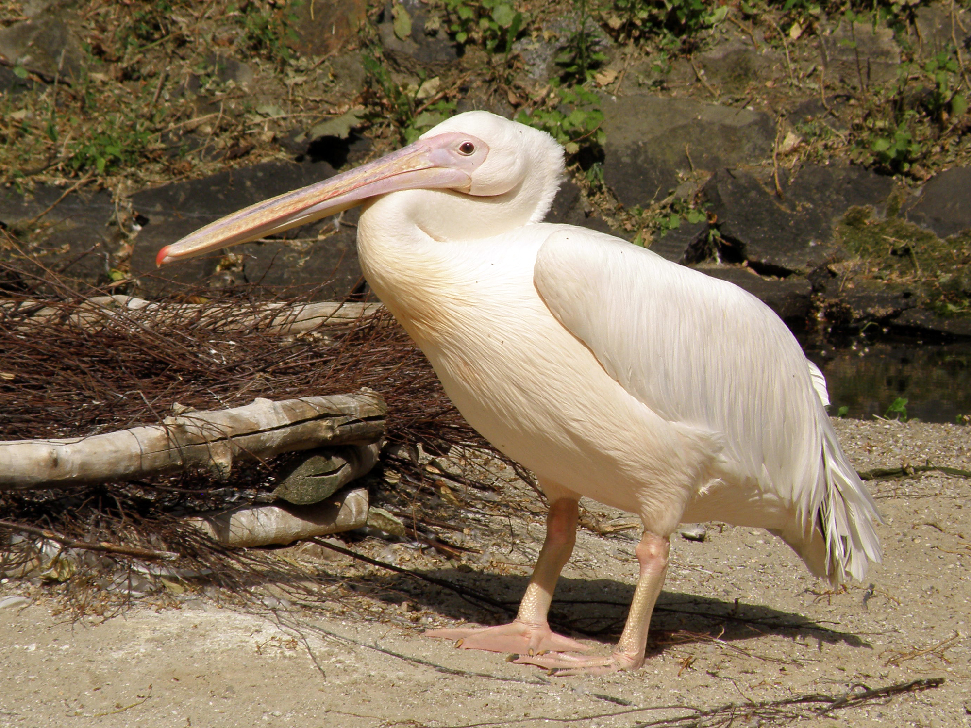 pripad pelikan online dating