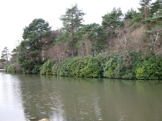 Quiet backwater in Hawley Lake - geograph.org.uk - 1614672
