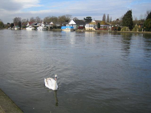 River Thames at Walton-on-Thames - geograph.org.uk - 364739