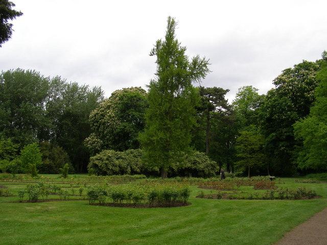 Rose garden at Morden Hall Park - geograph.org.uk - 1298648