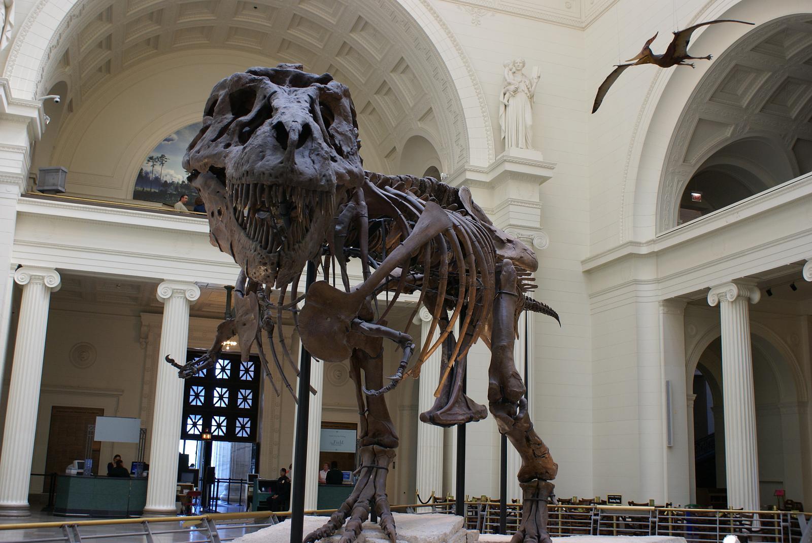 Tyrannosaurus_rex_fossil_-chicago_field_museum-6