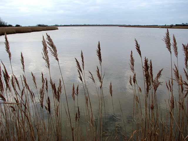 View across Horsey Mere - geograph.org.uk - 1103435