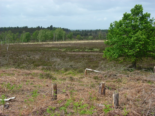 Woolmer Forest - geograph.org.uk - 439669