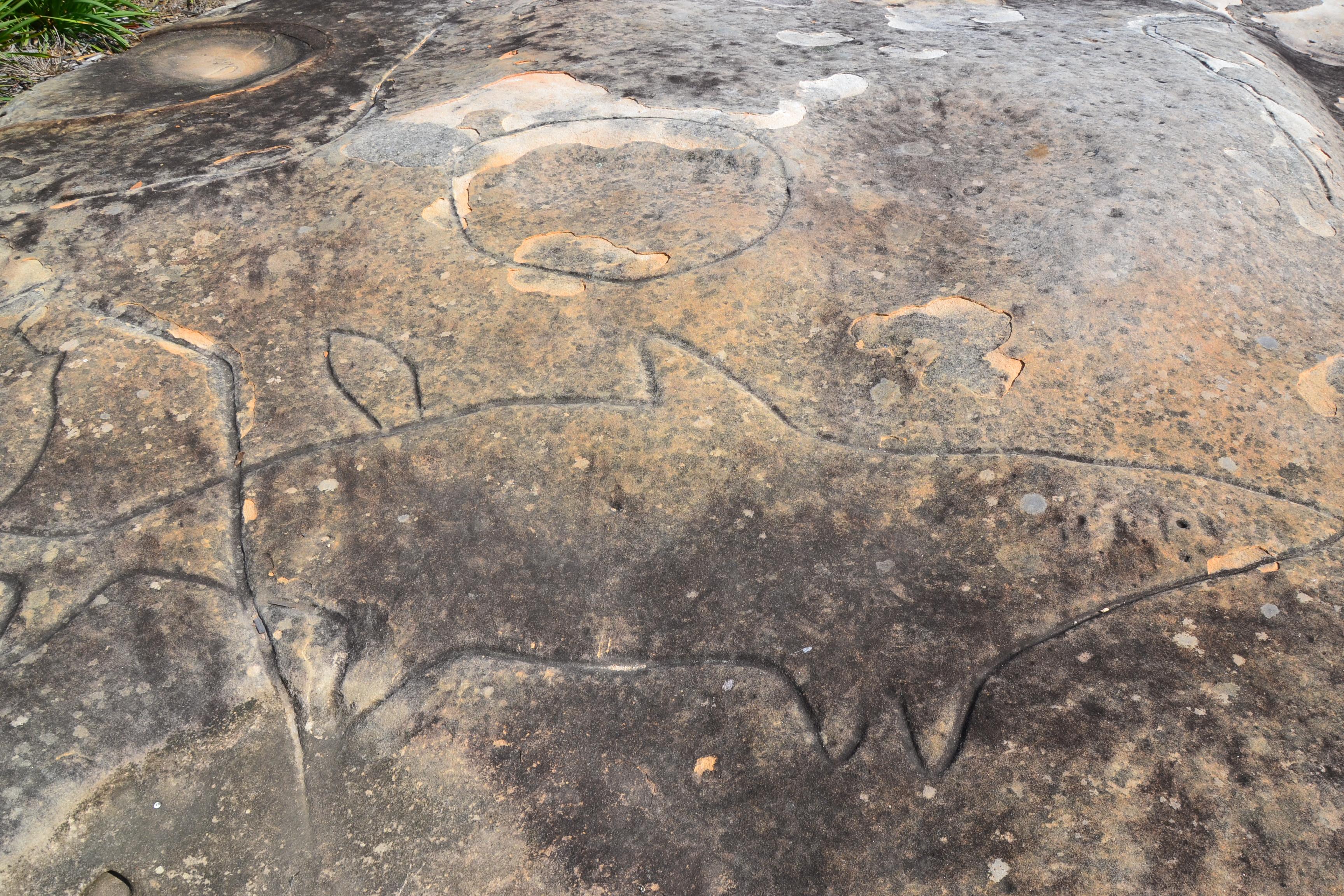 File rock carvings bondi g wikimedia commons