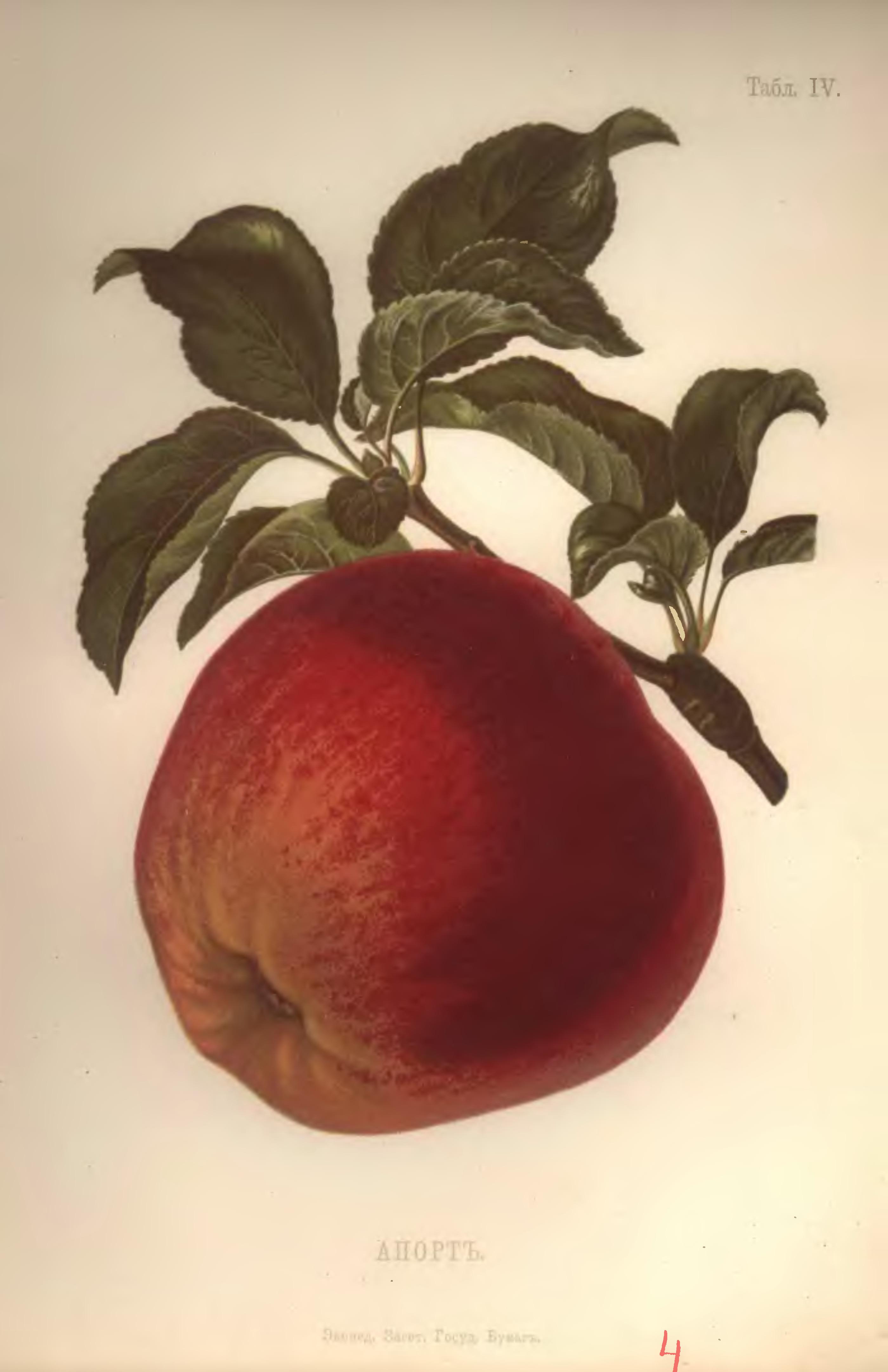 Какой ваш любимый сорт яблок?