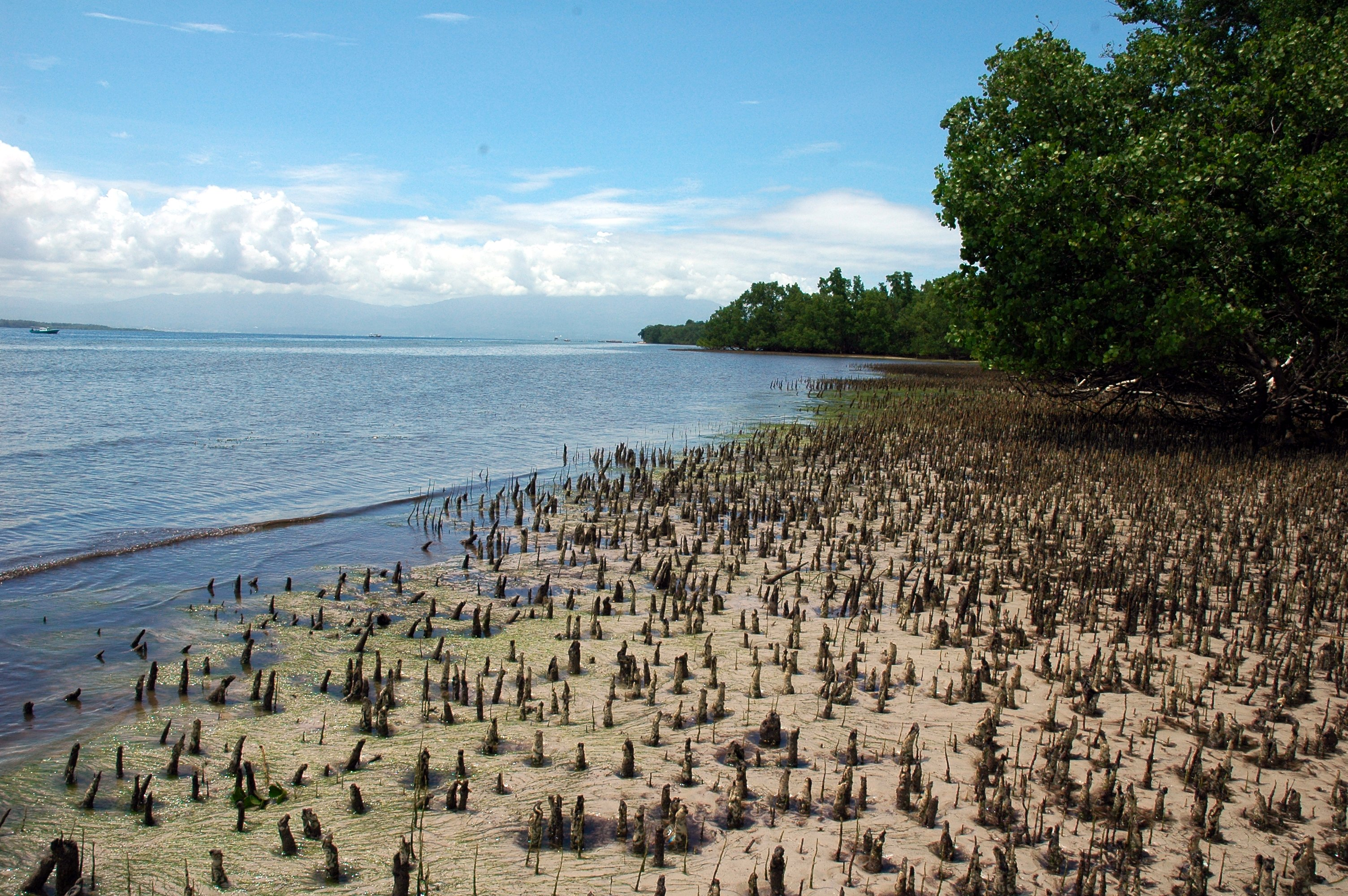 File:Bunaken_Mangrove_Coast on 2