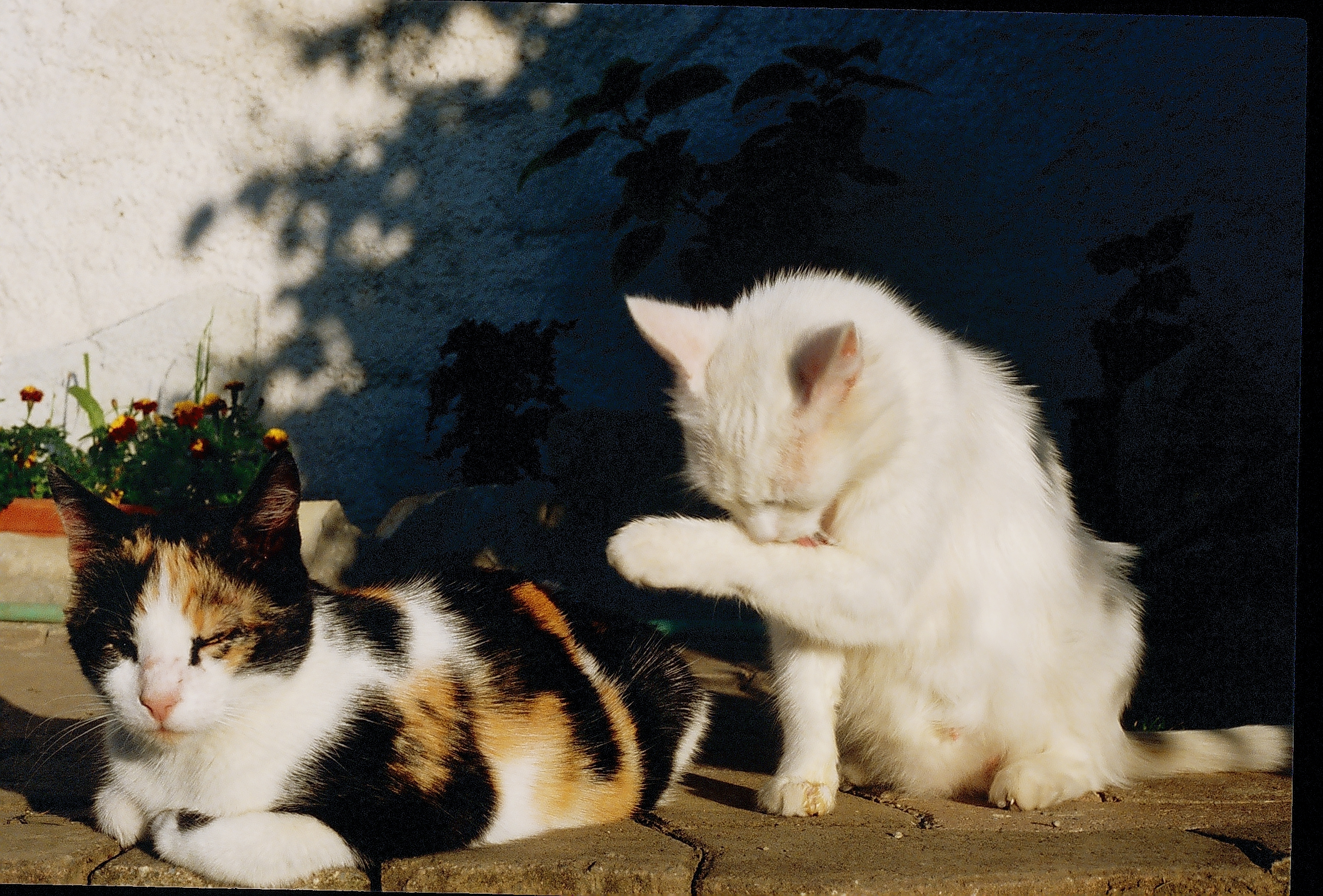 Calico Cats And Dogs