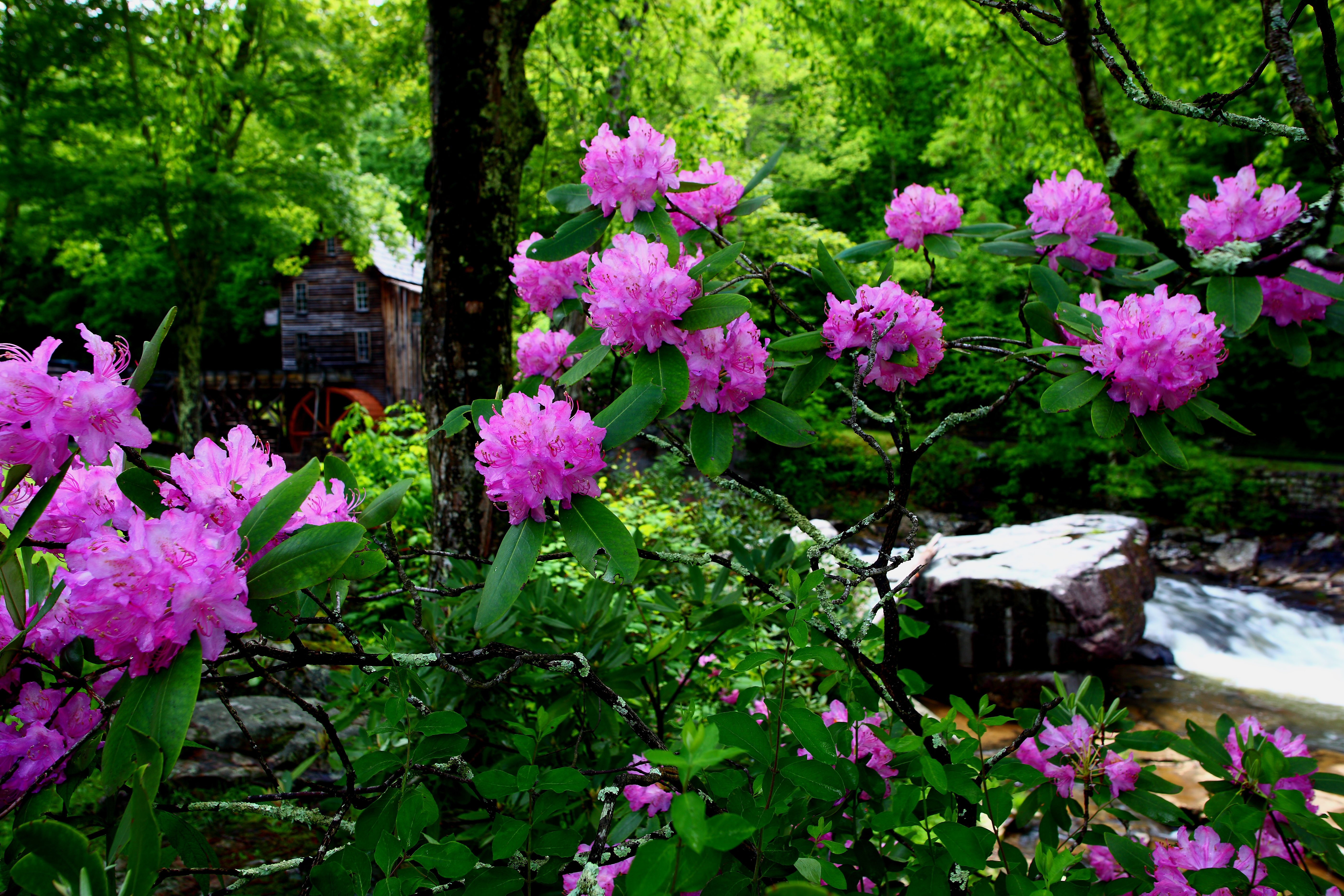 File:Country-mill-summertime-flowers - Virginia ...
