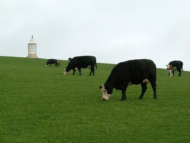 Cows grazing below the Marian Tower - geograph.org.uk - 1760060