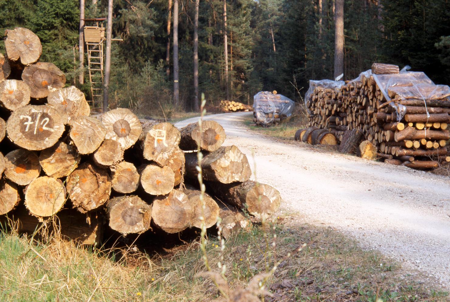 Cut Wood Logs ~ Wood cutting and the wisdom of inefficiency terrific