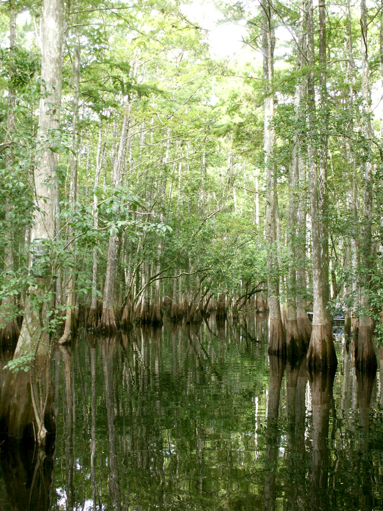 okefenokee swamp english essay