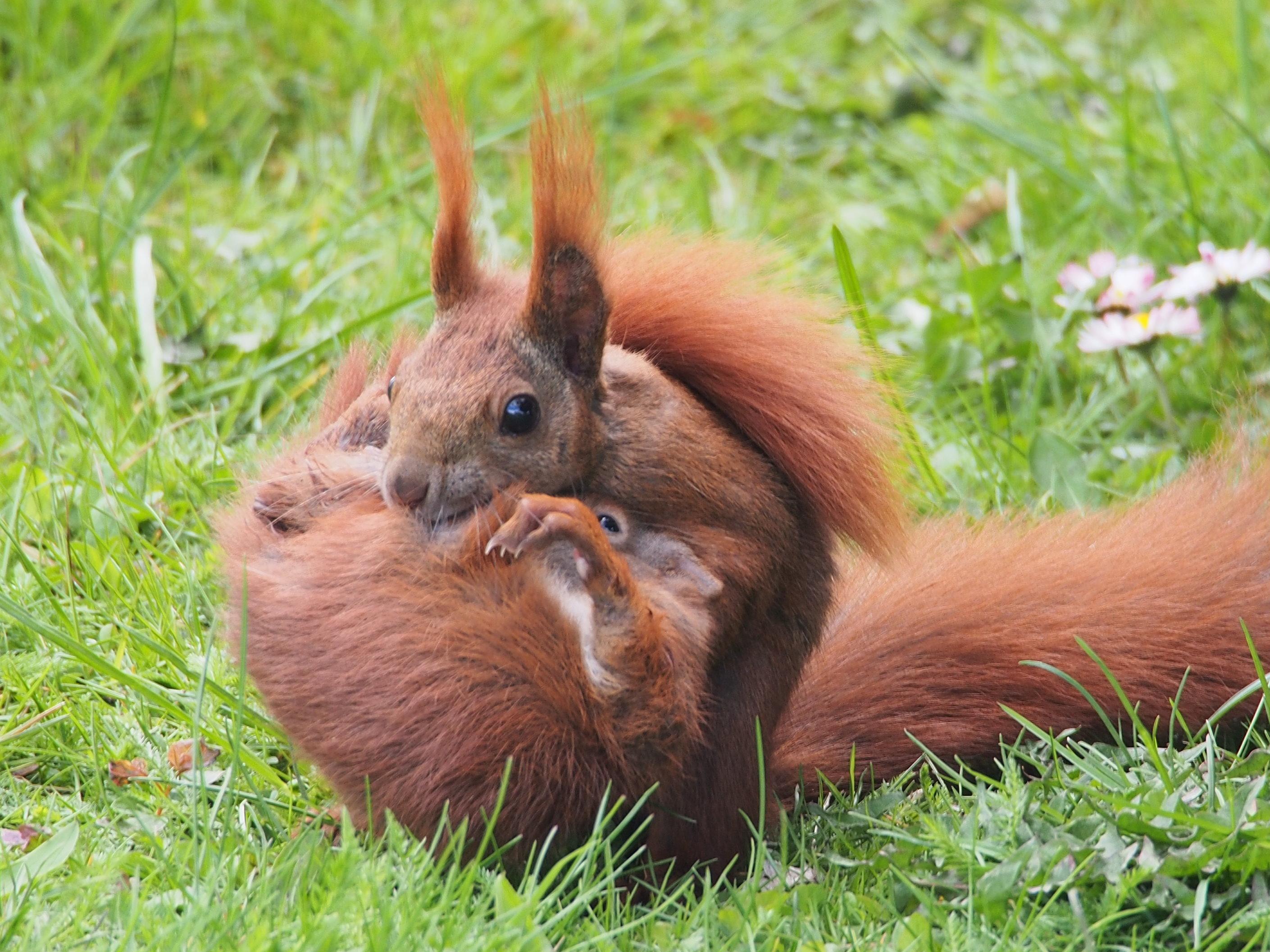 neu eichhörnchen ausmalbilder zum ausdrucken  top