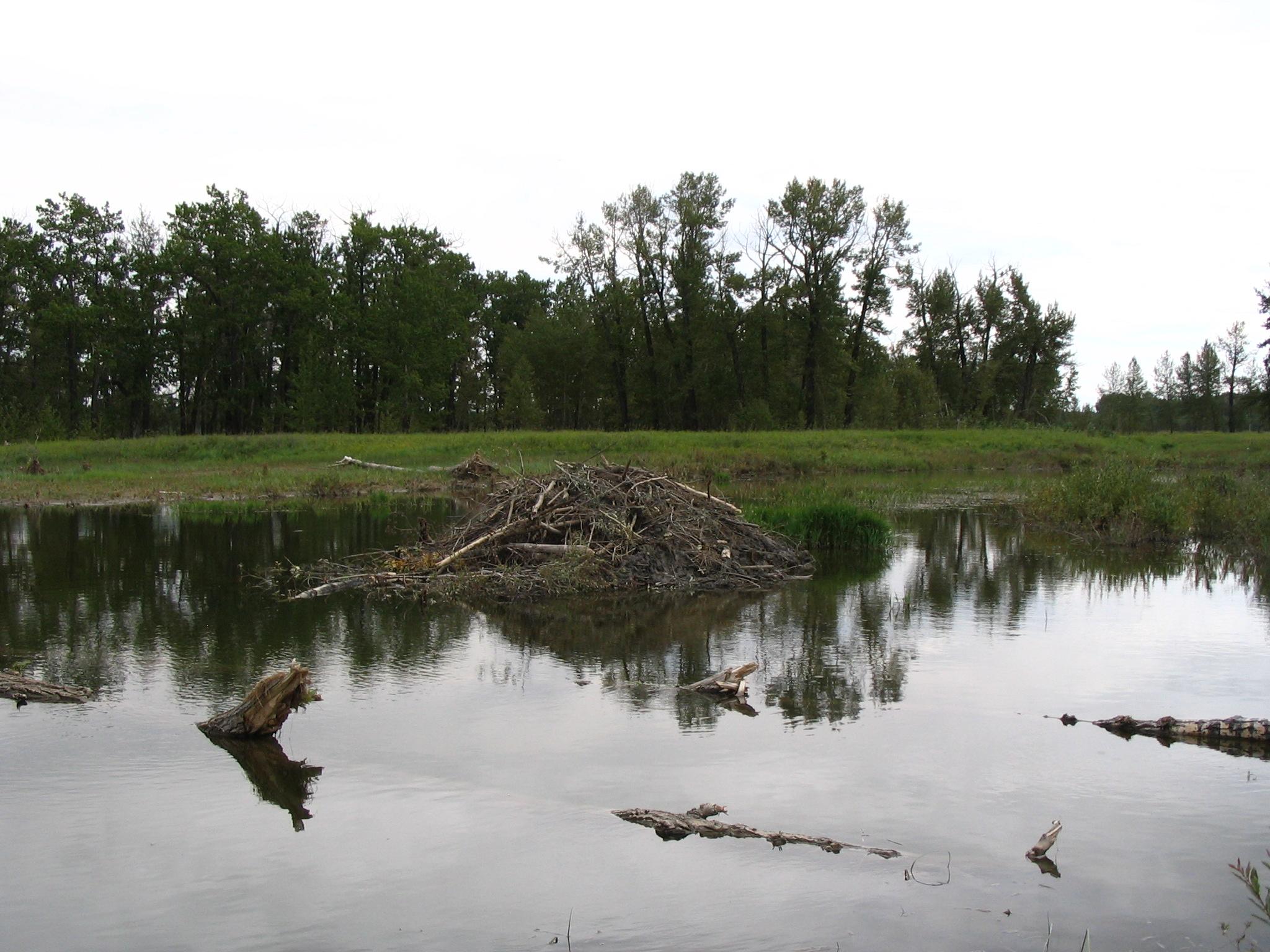 File fish creek provincial park beaver lodge jpg for Fish creek lodging