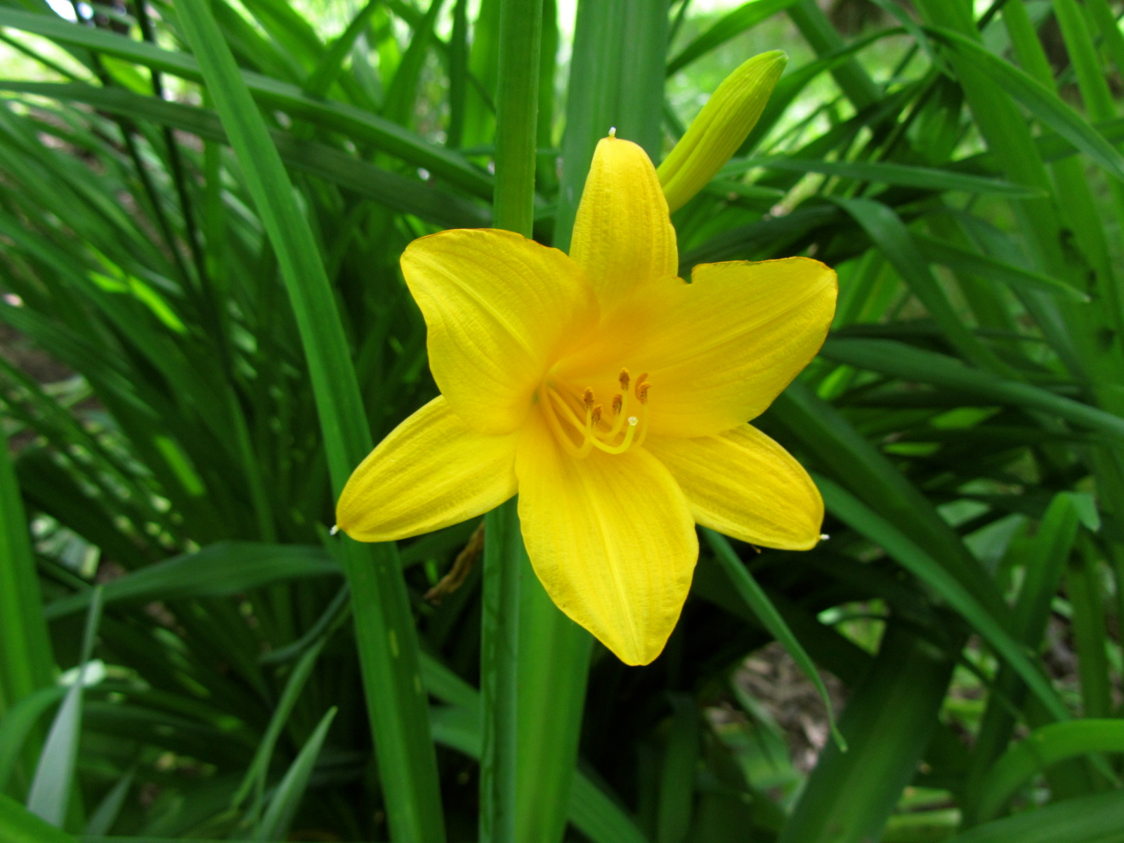 File Fleur Jaune Jpg Wikimedia Commons