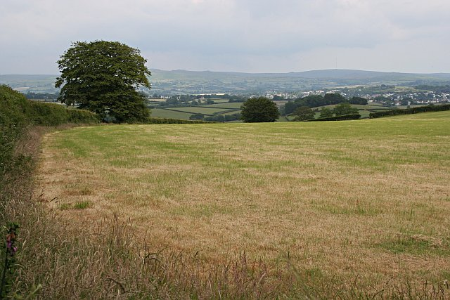 fields and grass - photo #14