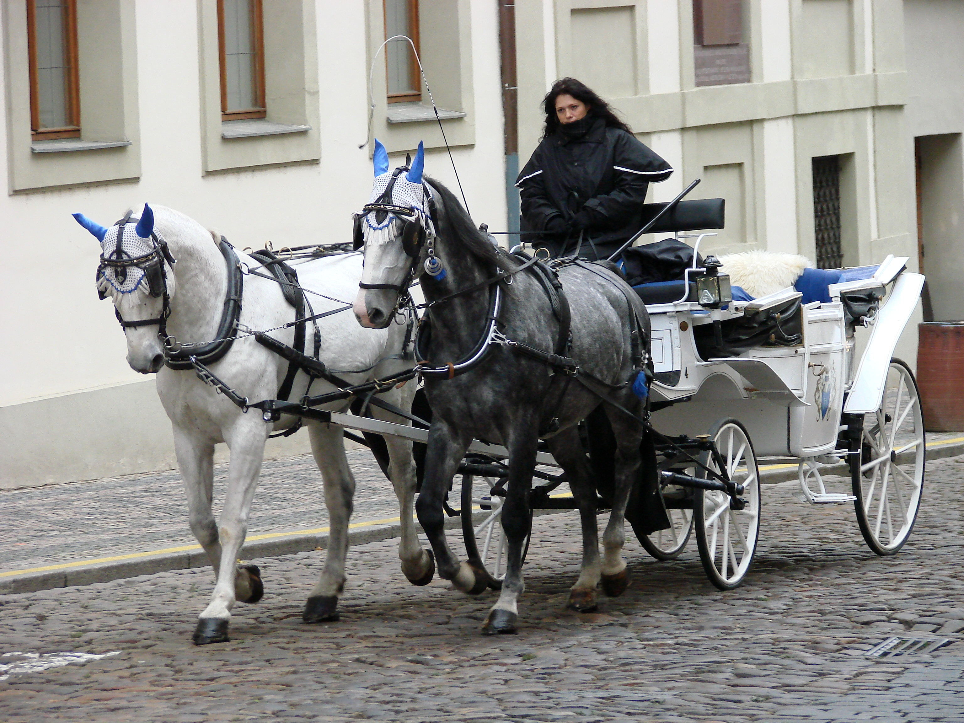 File Horse Drawn Carriage And Driver Prague Czech Republic Jpg