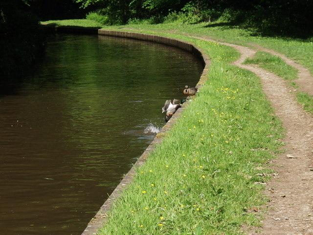 Llangollen Canal at Trevor - geograph.org.uk - 640648