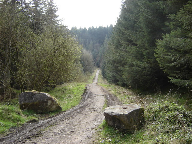Moor Road Wykeham Forest - geograph.org.uk - 1428621