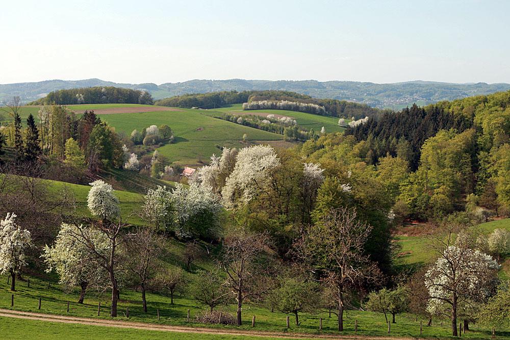 Single im odenwald DOG Zweigstelle Odenwald