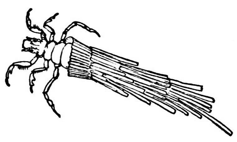 PSM V21 D619 Caddis worm with its case.jpg