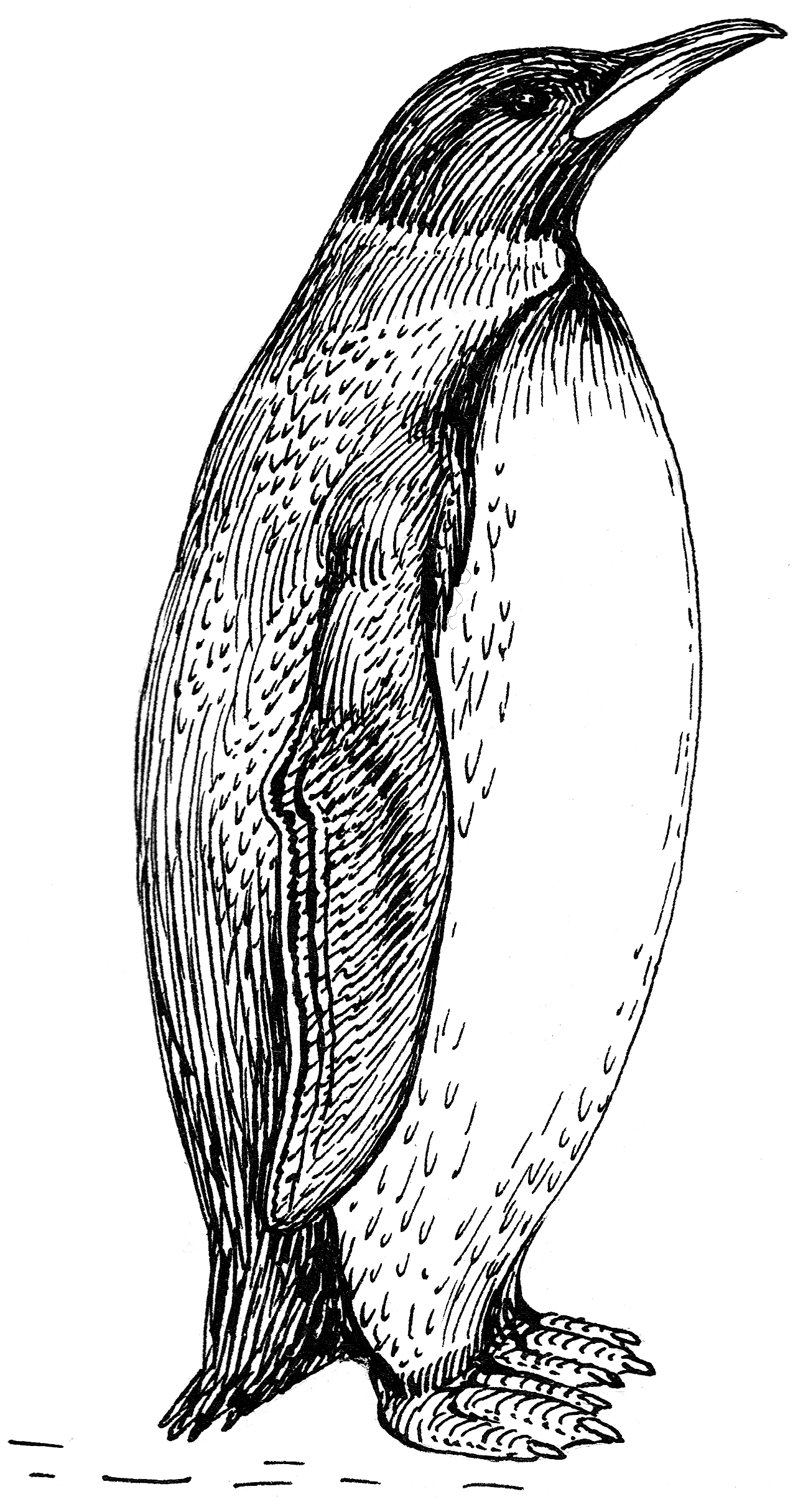 Line Drawing Penguin : File penguin psf wikimedia commons