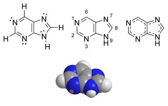 ארבע דרכים שונות להצגת המבנה הכימי של פורין