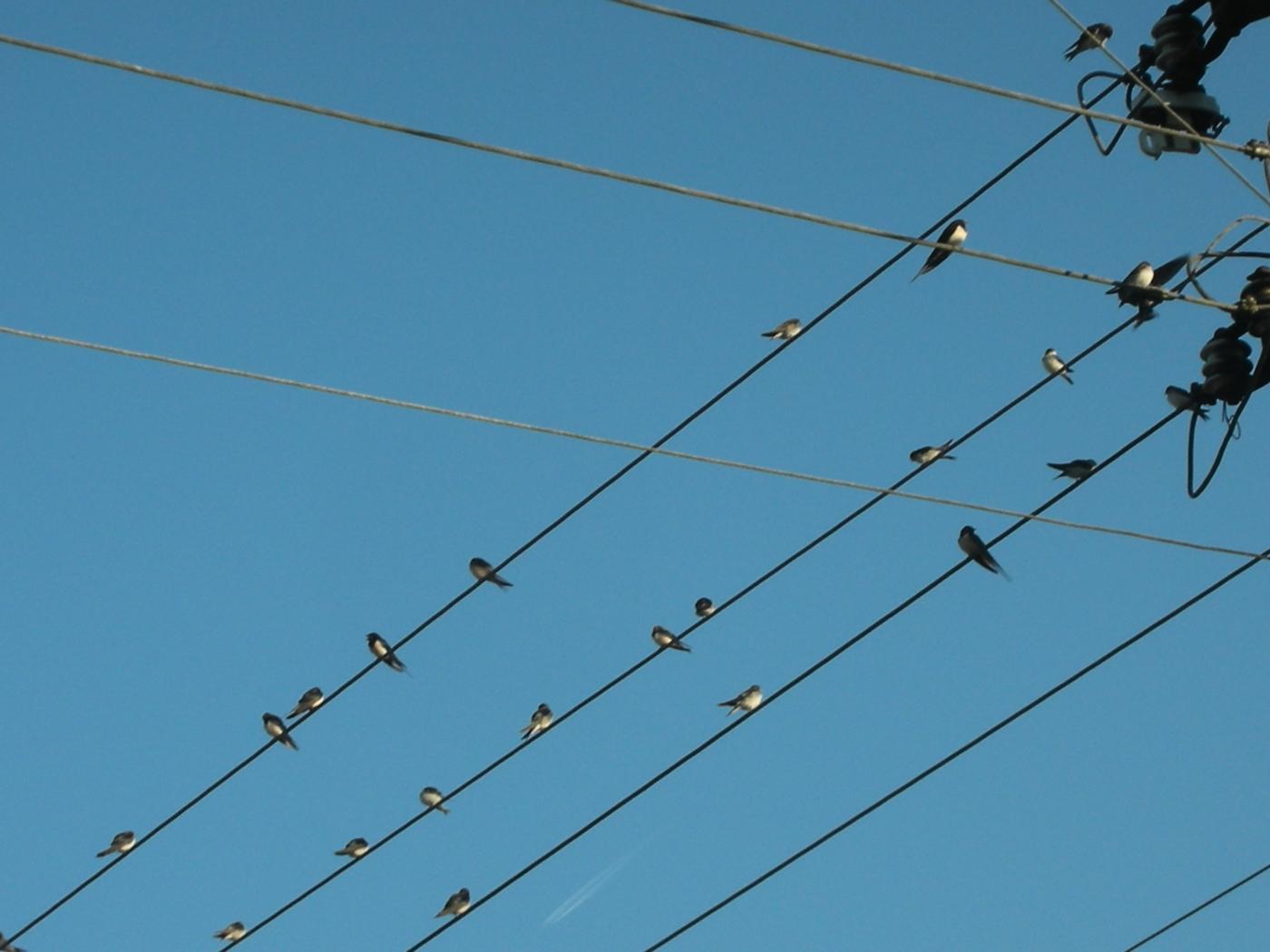 observation des oiseaux datant du Royaume-Uni
