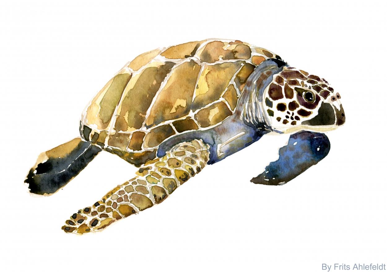 Sea Turtle Painting On Wood