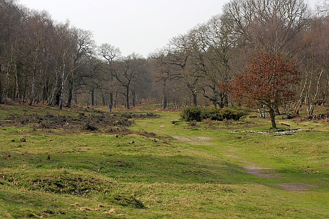 Seymour Grove, Sherwood Forest Country Park - geograph.org.uk - 1802517
