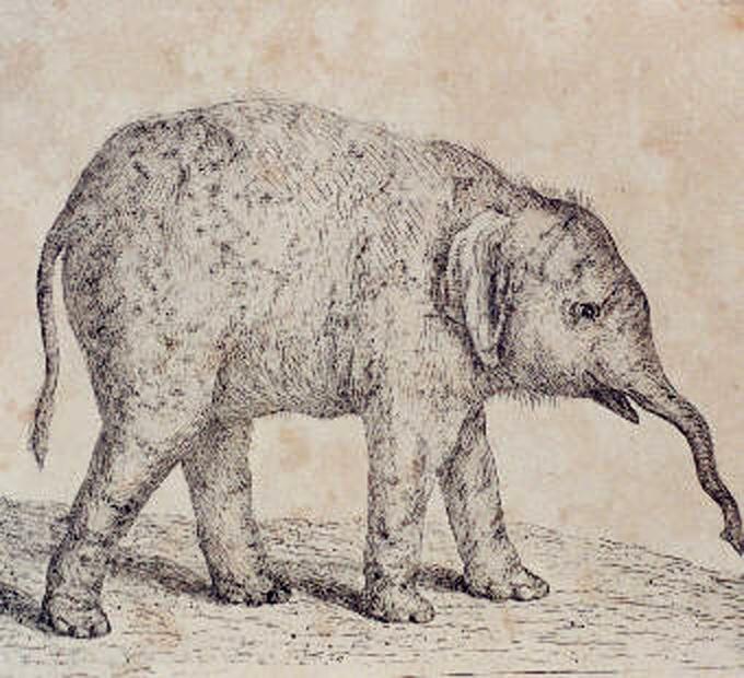 Goethe-Elefant – Wikipedia