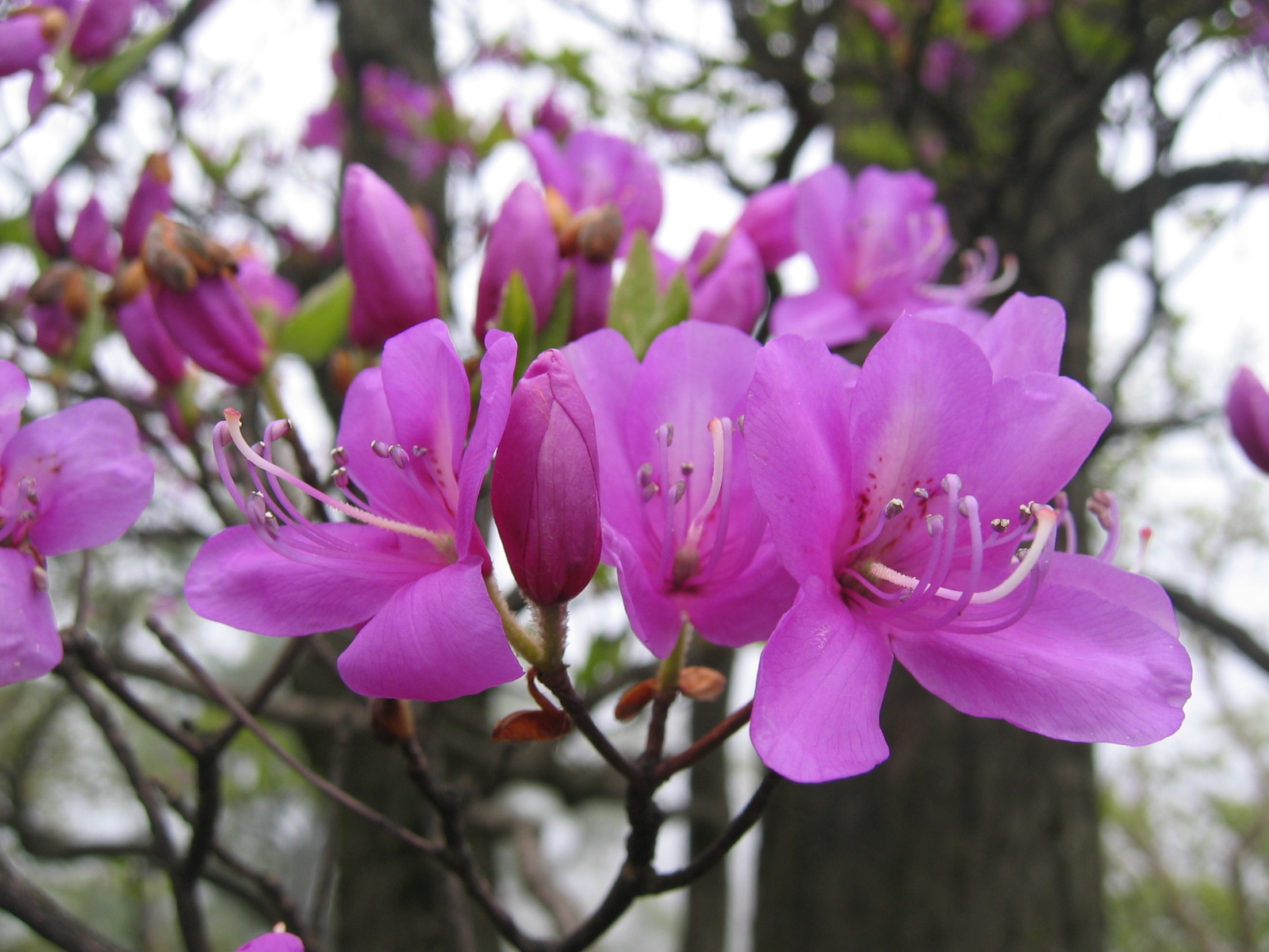absoluta temática casa: Plantas antipoluentes: sua casa protegida  #993288 1600 1200