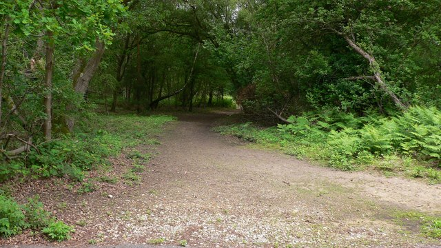 Track on Witley Common near Milford - geograph.org.uk - 1351906