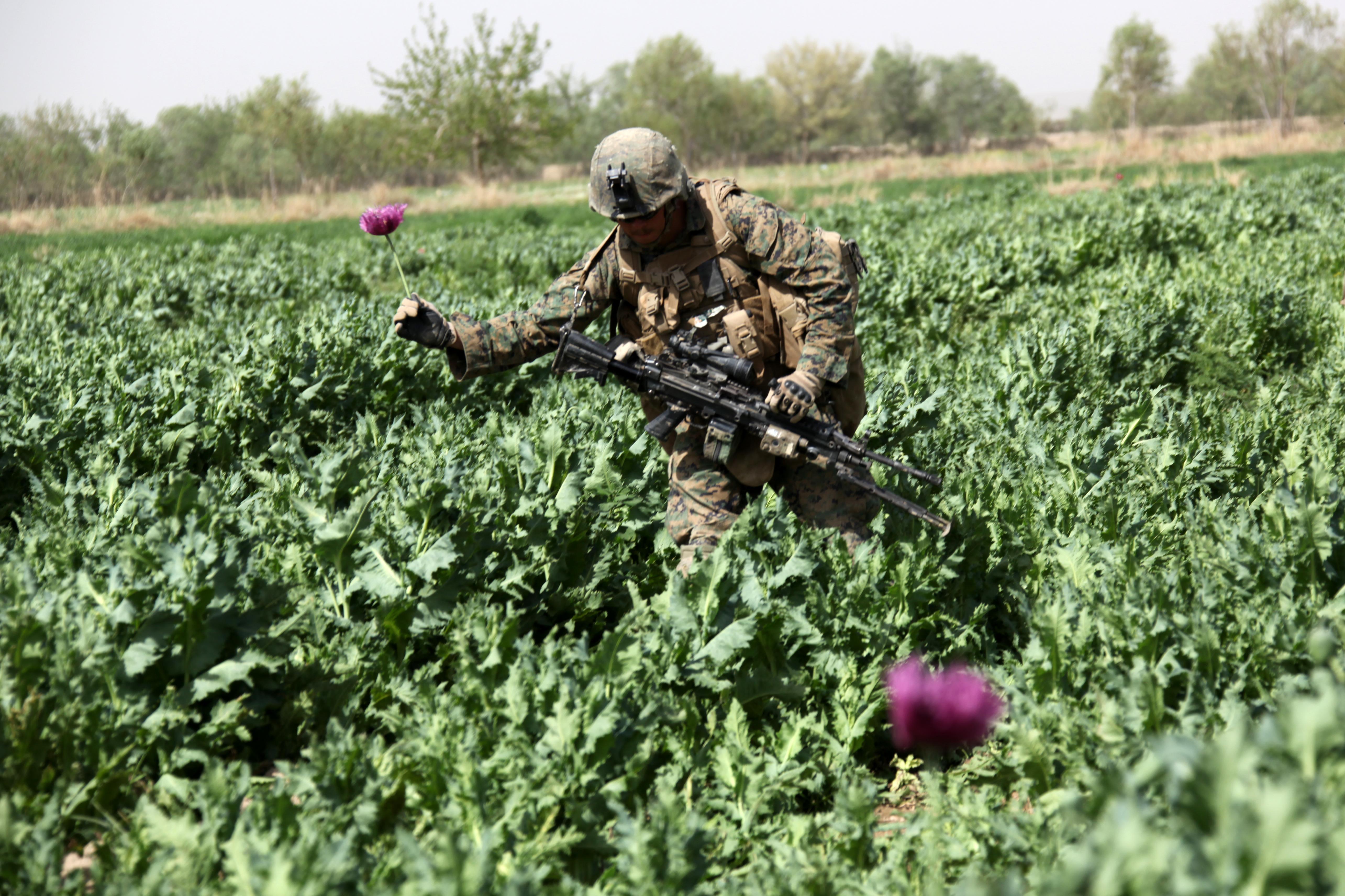 File:US Marine passing through Afghan Poppy field.jpg ...