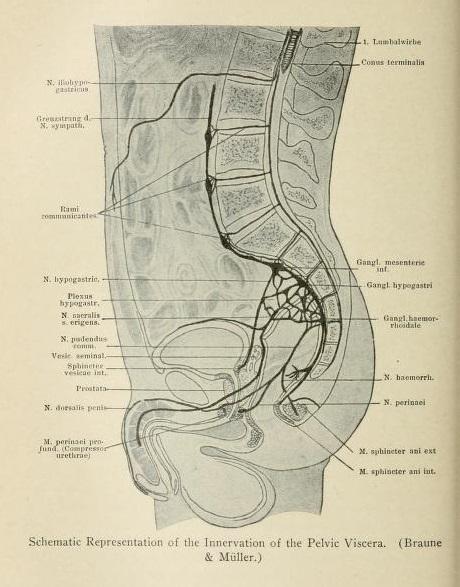 File:Vegetative neurology; the anatomy, physiology, pharmaco ...