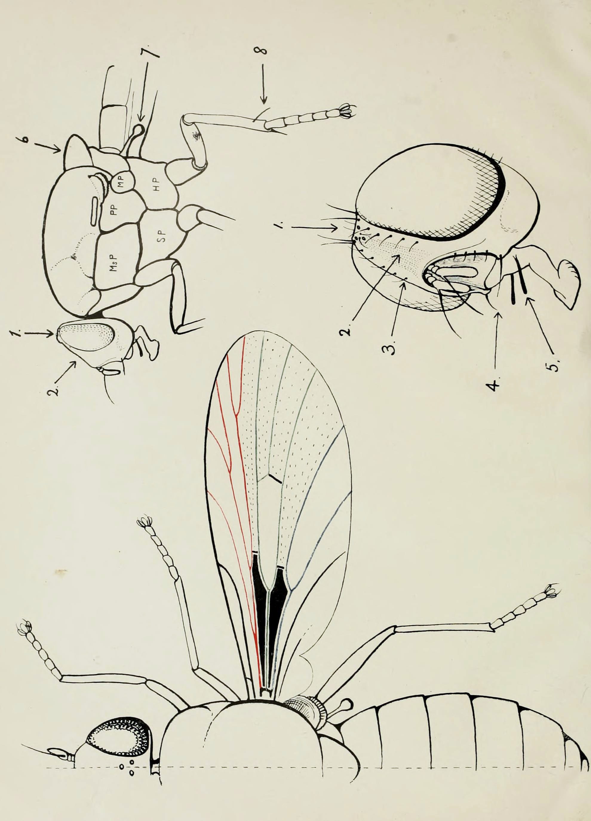 File59 Indian Insect Life Harold Maxwell Lefroy External