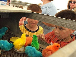 Florida AITC - Rainbow Chicks and Students