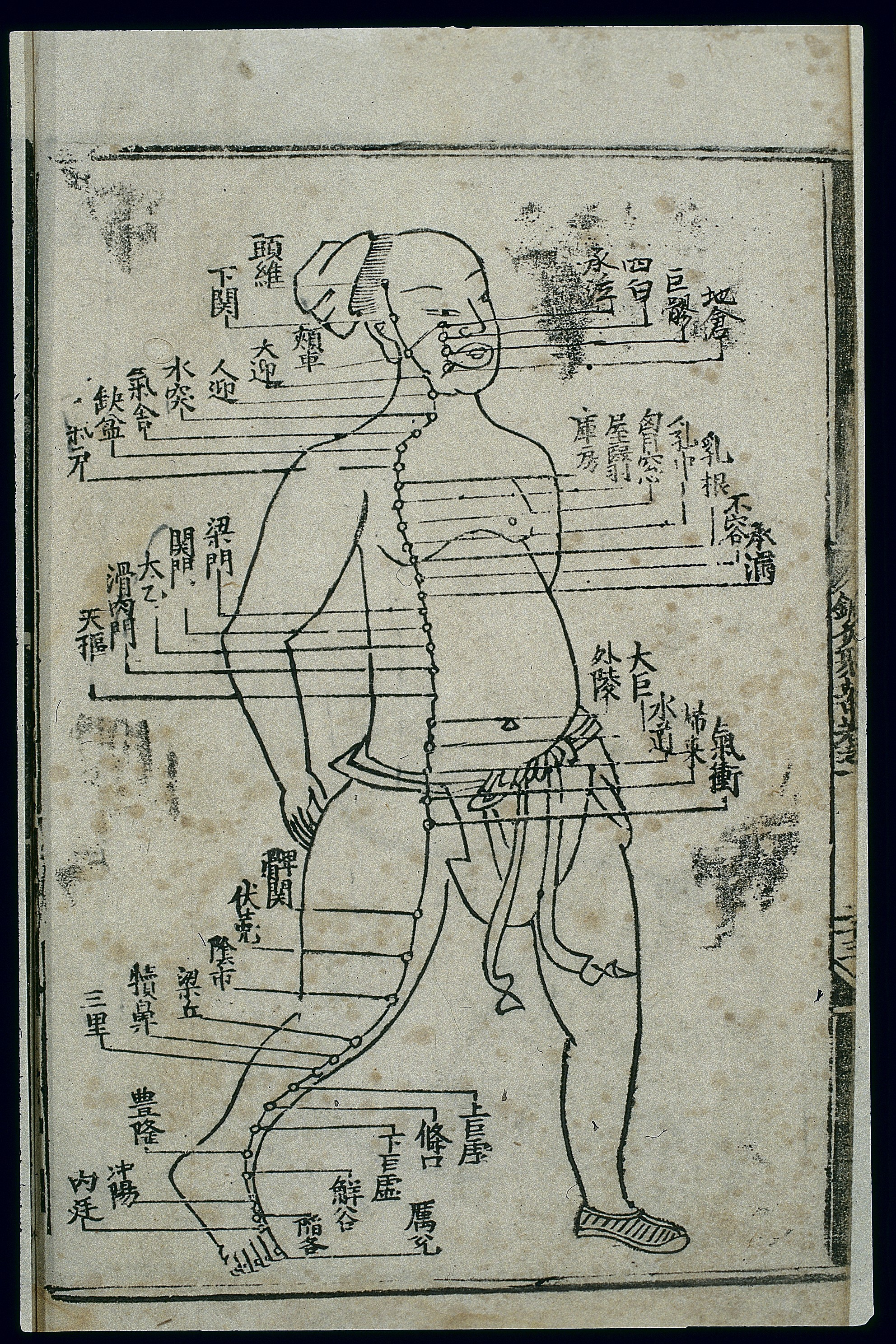 Chinese Horoscope Chart: Acupuncture chart stomach channel of foot yangming Chinese ,Chart