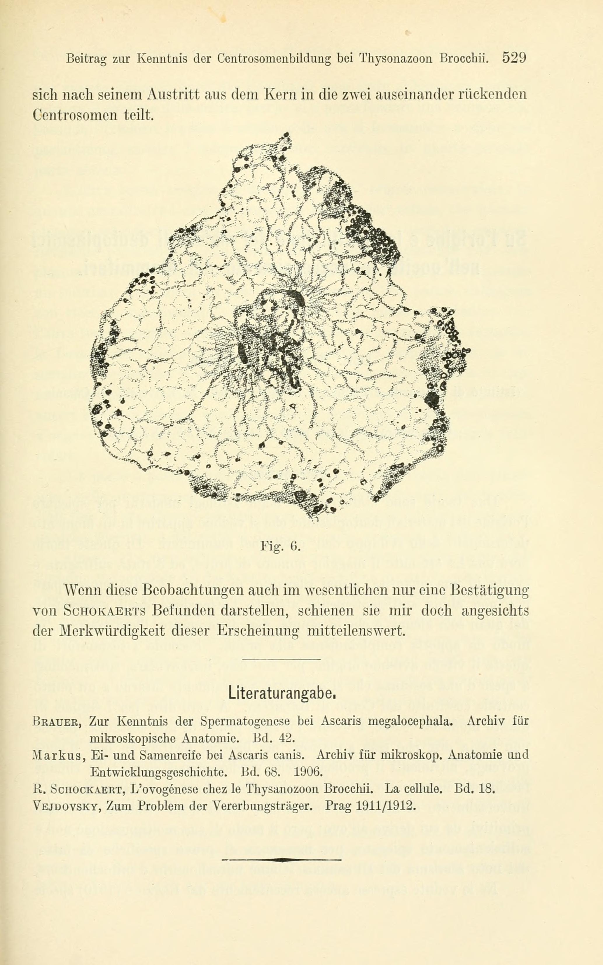Nett Anatomie Des Kerns Ideen - Menschliche Anatomie Bilder ...