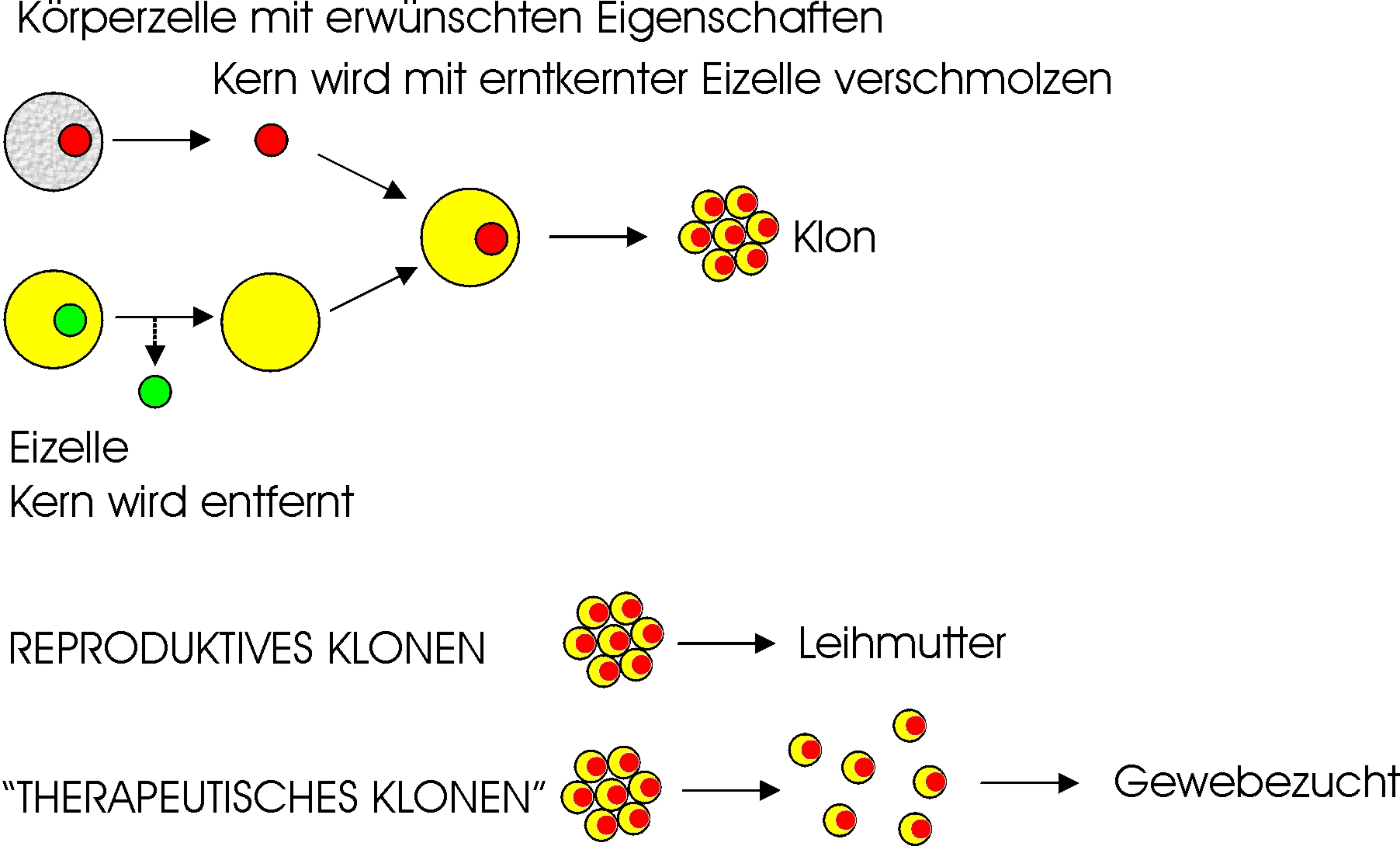 was bedeutet hoe auf deutsch