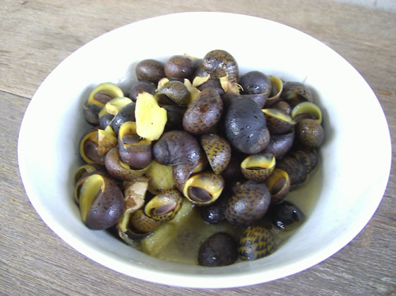 Cooked Snail Found In Rajang River.jpg